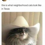 Cats In Texas