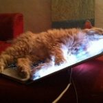 Chilling Out With The Laptop