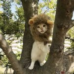 I Am The Lion Cat