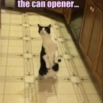 Movement By The Can Opener