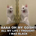 Omg I Thought I Was A Black Cat