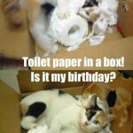 Toilet Paper In A Box8211