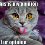 My Opinion Of You Opinion
